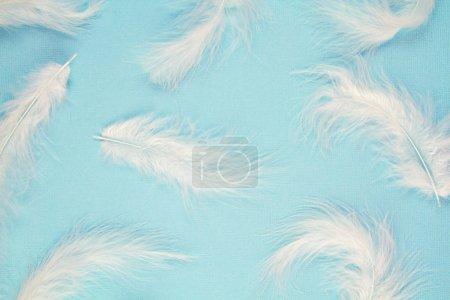 Photo pour Doux motif de plumes blanches douces sur fond bleu pastel - image libre de droit