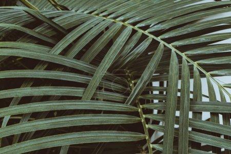 Foto de Hojas de verdes palmeras tropicales - Imagen libre de derechos