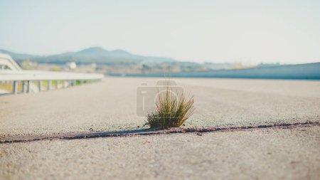 Photo pour Plante verte fait le chemin à travers le béton et d'asphalte, de plus en plus sur la route - nouvelle vie, de la puissance du concept de nature - image libre de droit