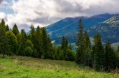 slope of mountain range with coniferous forest