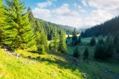 lovely valley with spruce forest. wonderful landscape of Apuseni mountains in autumn. beautiful cloudscape above the ridge. travel Romania discover europe concept