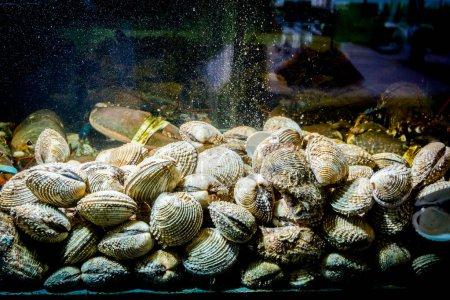 Palourdes vivantes sont dans l'aquarium, réservoir au restaurant traditionnel de fruits de mer à vendre, coquillages .