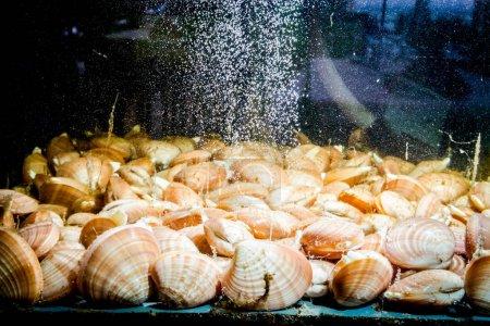 Coquilles à vendre, palourdes à l'intérieur de l'aquarium dans un restaurant