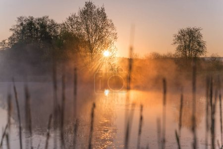 Sunrise Light Piercing Through Mist and Trees and ...