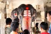 An elephant blessing a pilgrim at Virupaksha temple. Taken in India, August 2018.