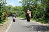 An elephant on the way to the Amer (or Amber) Fort of Jaipur, on a motorcycle. Taken in India, August 2018