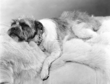 Dog napping on a fur blanket