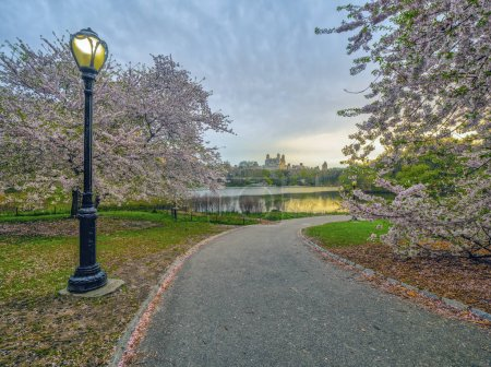 Photo for Central Park, Manhattan, New York City in spring with cherry trees in bloom - Royalty Free Image