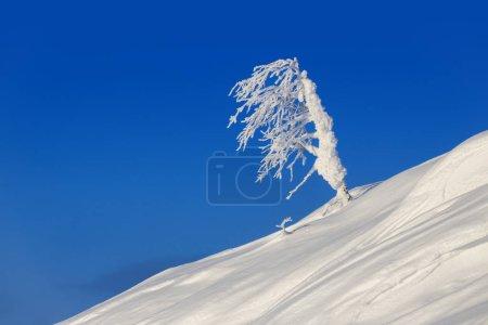 Photo pour Belle journée ensoleillée dans la forêt de l'hiver. Les arbres recouverts de neige. Changement climatique et le réchauffement de la planète terre. - image libre de droit