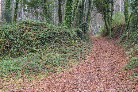 Foto de Follaje cubierto camino en bosque verde - Imagen libre de derechos