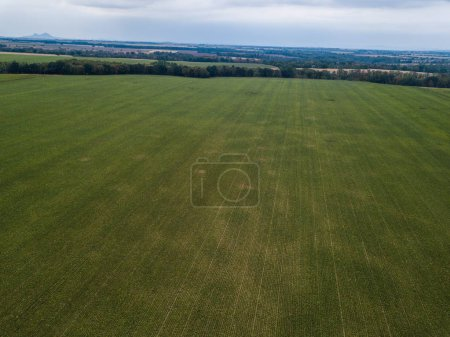 Photo for Green agricultural field in rural area - Royalty Free Image