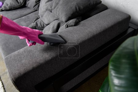 Photo for Close-up view of person in rubber glove cleaning furniture with vacuum cleaner - Royalty Free Image