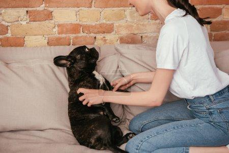 Photo pour Vue recadrée de femme heureuse jouant avec mignon bouledogue français dans le salon - image libre de droit