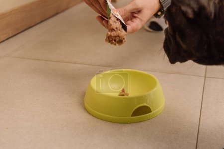 cropped view of woman holding tasty pet food near french bulldog and bowl