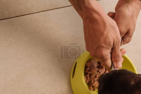 top view of woman holding tasty pet food near french bulldog and bowl
