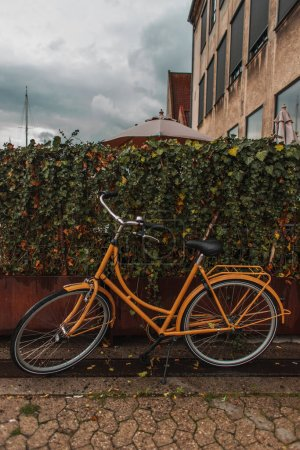 Photo for Orange bicycle near bushes on urban street with cloudy sky at background - Royalty Free Image