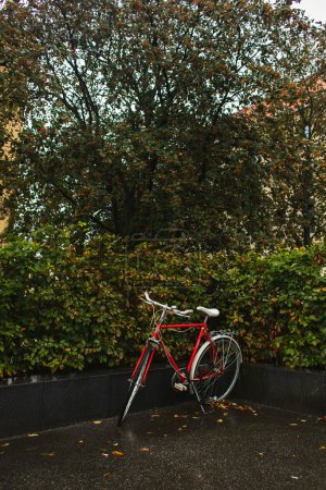 Photo for Red bicycle near green bushes and trees on urban street - Royalty Free Image