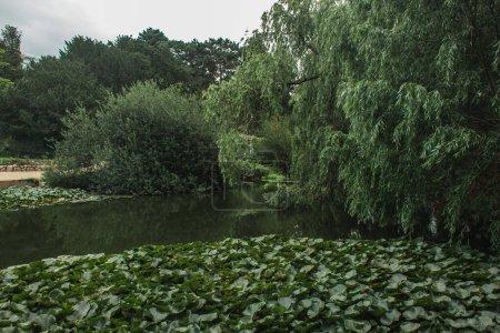 Photo pour Arbres verts près de livre avec ciel nuageux en arrière-plan dans le jardin botanique, Copenhague, Danemark - image libre de droit