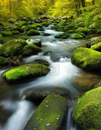 Photo pour Ralentir l'eau semer un ruisseau avec des roches et de la mousse - image libre de droit