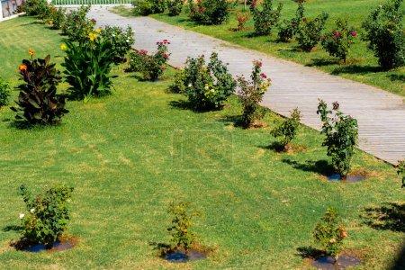 Photo pour Beauté pelouse verte avec chemin - image libre de droit