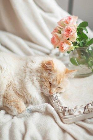 Foto de Hermoso gato con ojos azules se encuentra en la cama y se relaja - Imagen libre de derechos