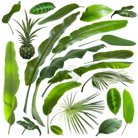 Photo for More beautiful exotic tropical leaves, isolated leaf background - Royalty Free Image