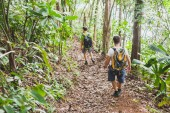 people hiking with backpacks, jungle trekking, group of tourists backpackers walking in the forest