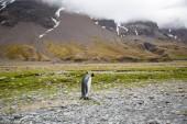 """Постер, картина, фотообои """"Некоторые пингвинов в Арктике ходить вокруг Северного полюса и ищет молодые"""""""