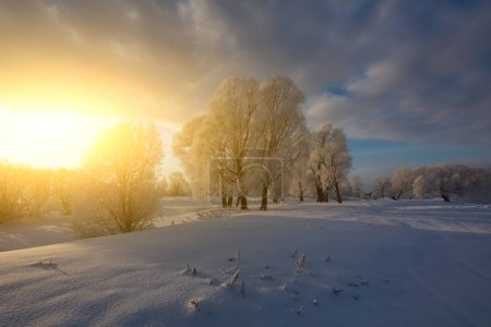 Photo for Winter landscape. Cold day. - Royalty Free Image