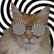Beautiful cool disco cat with hypnotic sunglasses...