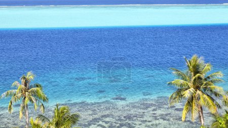 in polynesia bora bora  the view in the  coastline lagoon  and palm like paradise concept and rela