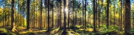 Photo for Panoramic autumn forest landscape. Fall nature background - Royalty Free Image