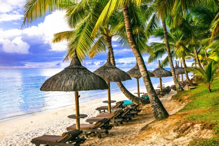 Tropical vacation. beautiful beach scenery with palms and beach ,Mauritius islad.