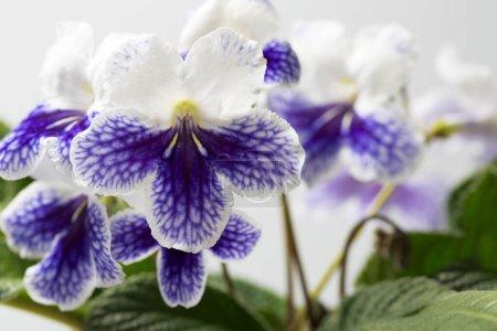 Photo pour Fleurs violettes dans le jardin. - image libre de droit