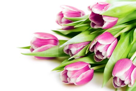 Photo for Bouquet of pink tulips isolated on white - Royalty Free Image