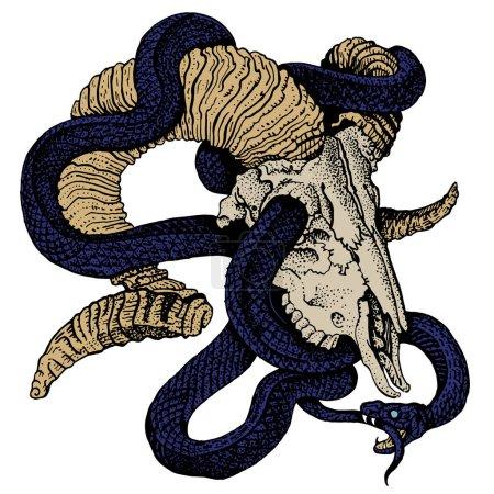 Mythological Ouroboros snake and goat skull. Hand ...