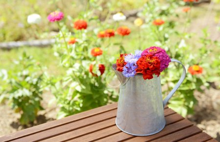 Metal pitcher full of brightly coloured flowers, freshly cut from a summer flower garden