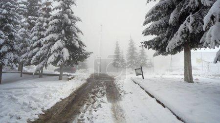 Foto de Nevados camino a través del bosque de pinos montaña siempreverde denso en invierno con clima de niebla baja visibilidad - Imagen libre de derechos