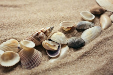 Photo for Small seashells lie on the sand. Vintage style. Place for text. Close up. Blurred background. - Royalty Free Image