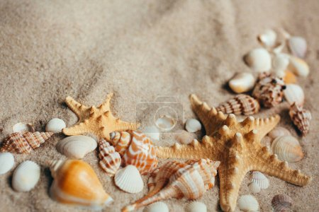 Photo for Beach with a lot of seashells and starfishes. Macro with copy space included. - Royalty Free Image