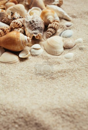Photo for Sea shells of many types and sizes lie in the sand. Marine topics. Place for text. Selective focus. - Royalty Free Image