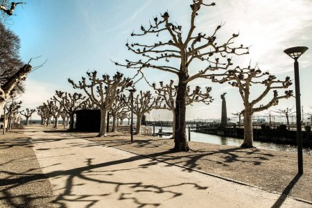 Photo pour Konstanz, German, february 25, 2019. original trimmed treetops on the banks of the Lake Boden on a sunny day with beautiful shadows against a clear cloudless sky - image libre de droit