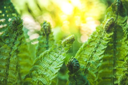 close up view of beautiful green fern and sunlight