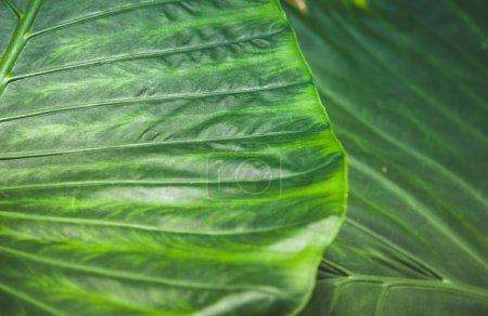 full frame of green leaves texture