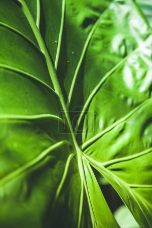 Photo for Full frame of green leaf texture - Royalty Free Image