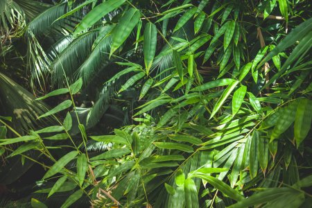 close up view of green palm leaves background