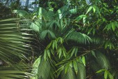 close up view of beautiful palms with green leaves