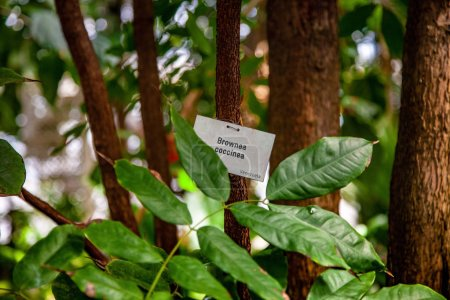 close up view of exotic plants with green leaves and brownea coccinea, venezuela sign