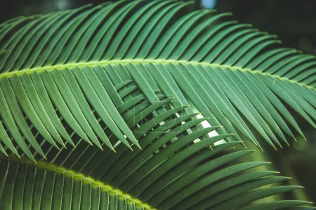 close up view of beautiful green palm leaves