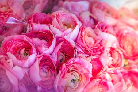 close up view of beautiful pink ranunculus flowers backdrop